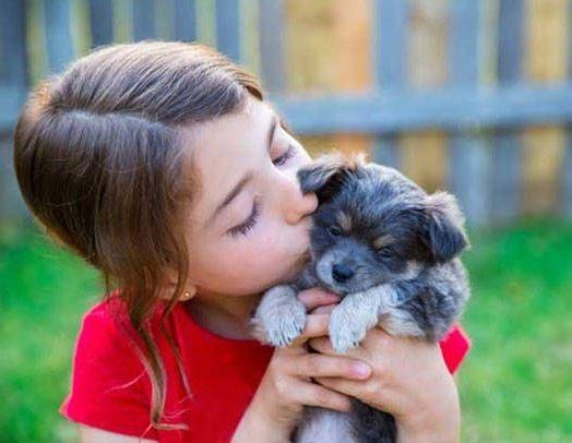 comparador seguros mascotas