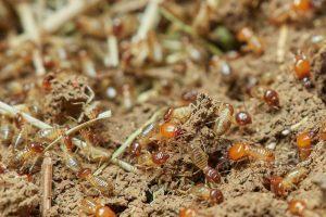 eliminar termitas en sevilla